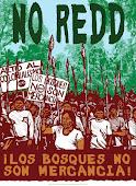 NO-REDD-afiche