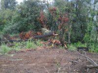 devastación Xochi