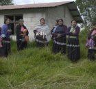 El lunes 3 de agosto de 2015, las familias desplazadas del paraje Banavil, municipio de Tenejapa, regresaron a sus hogares para hacer labores de limpieza...