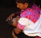 COMUNICADO # 3 INAUGURAN LA ESCUELA DE PARTERIA EN LA UNICH LA UNIVERSIDAD INTERCULTURAL DE CHIAPAS (UNICH) SE HA BRINCADO INSTANCIAS OFICIALES Y PROCESOS PARA...